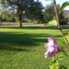 A view of green #2 with rose of Sharon tree flowering in foreground at Cobleskill Golf & Country Club
